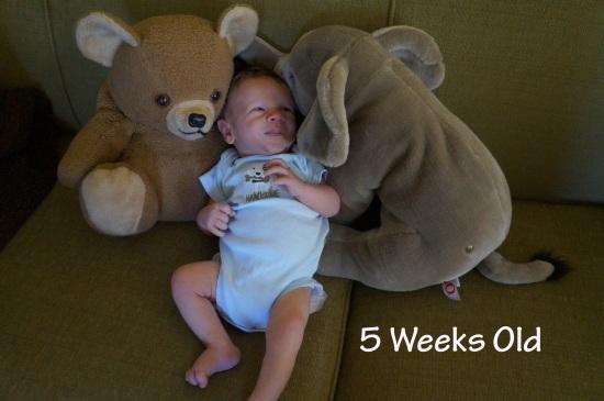 DSC02968 5 weeks