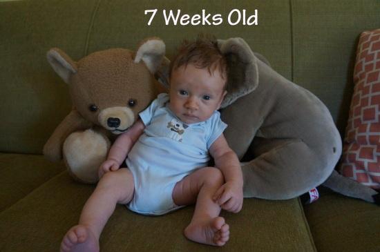 DSC03081 7 weeks