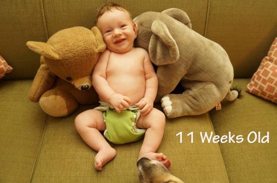DSC03743 11 weeks