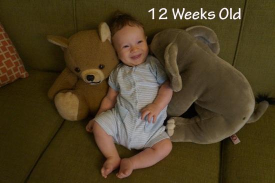 DSC03801 12 weeks