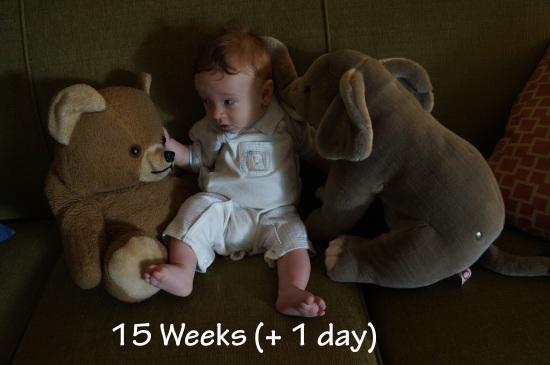 DSC04074 15 weeks