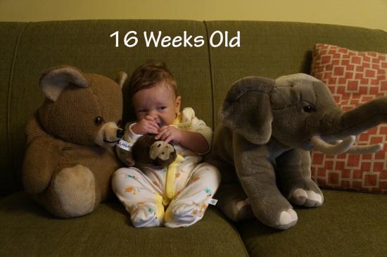 DSC04275 16 weeks