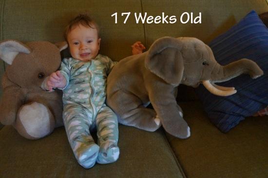 DSC04324 17 weeks