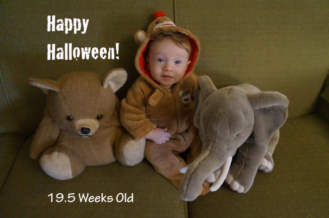 DSC04562 19.5 weeks Halloween