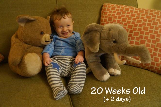 DSC04632 20 weeks