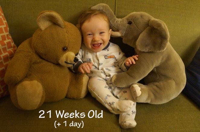DSC04874 21 weeks