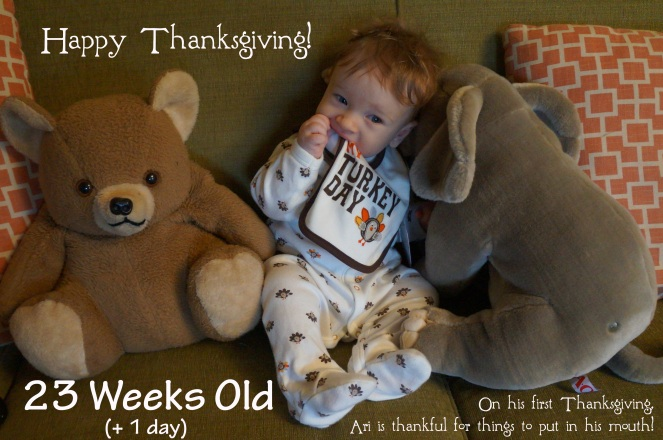 DSC05101 23 Weeks Thanksgiving