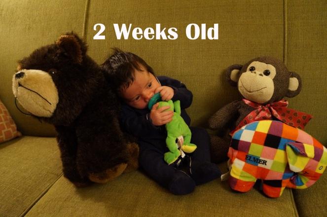 DSC05221 2 weeks